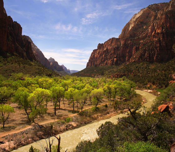 Cottonwoods along the Virgin River in Zion Canyon